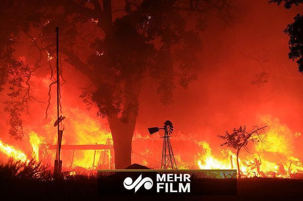 شمار قربانیان آتش سوزی در کالیفرنیا به 50 نفر رسید