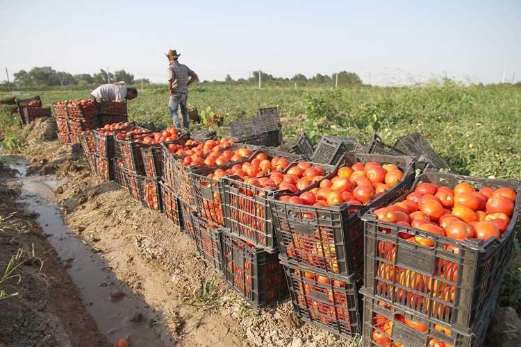 رو دست بازار به کشاورزان