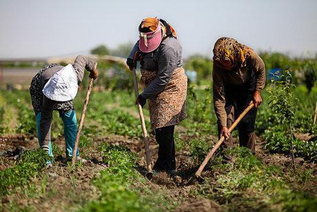 بانوان؛ پتانسیلی مغفول مانده در کشاورزی، سهمی بزرگ اما حمایتی اندک