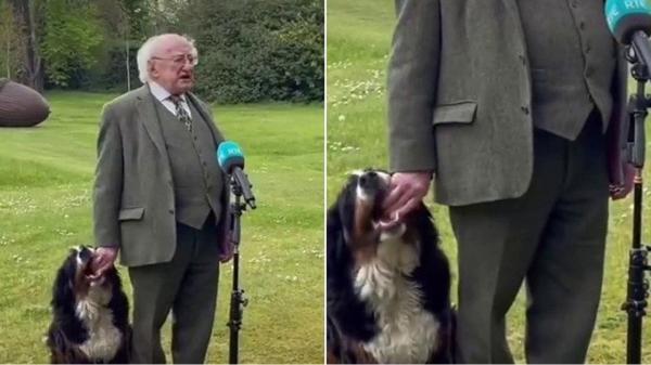 شیطنت سگ رئیس جمهور ایرلند حین سخنرانی زنده!